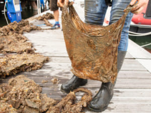 rác gia đình, rác sinh hoạt, túi tự phân hủy sinh học, bảo vệ môi trường